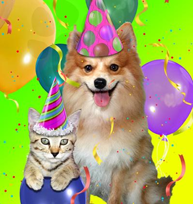 Birthday Shelter Animals