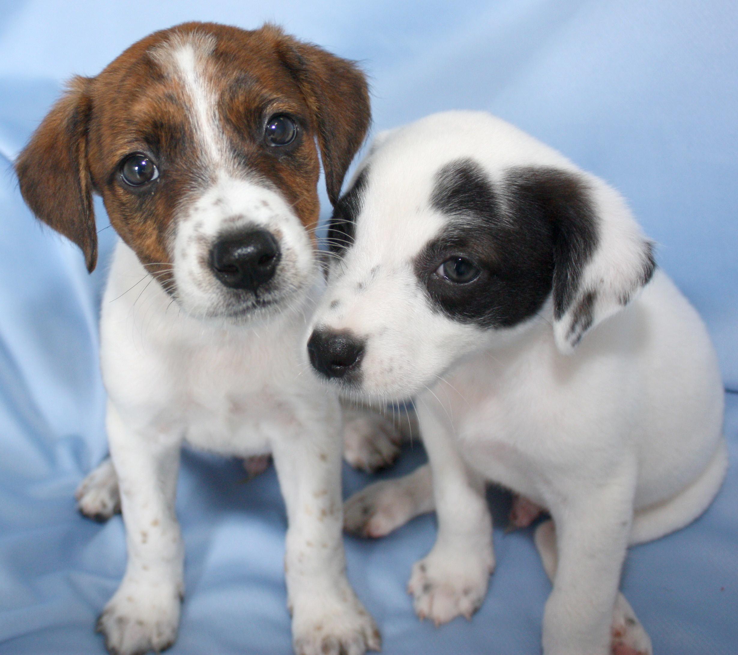 Foster Care Dorothy O Connor Pet Adoption Center