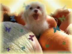 lola-fall-11-1-