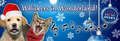 Whiskers in Wonderland!