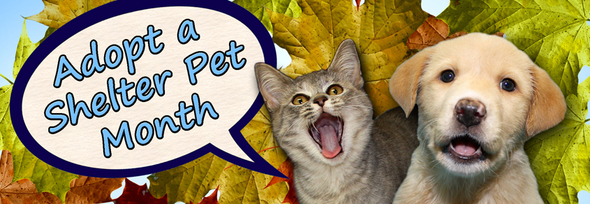 Adopt A Shelter Pet Month Dorothy O Connor Pet Adoption Center